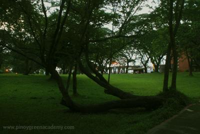 LyingtreeS