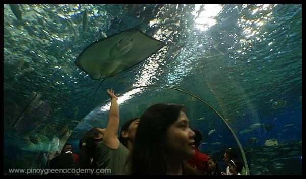 Manilaoceanpark1