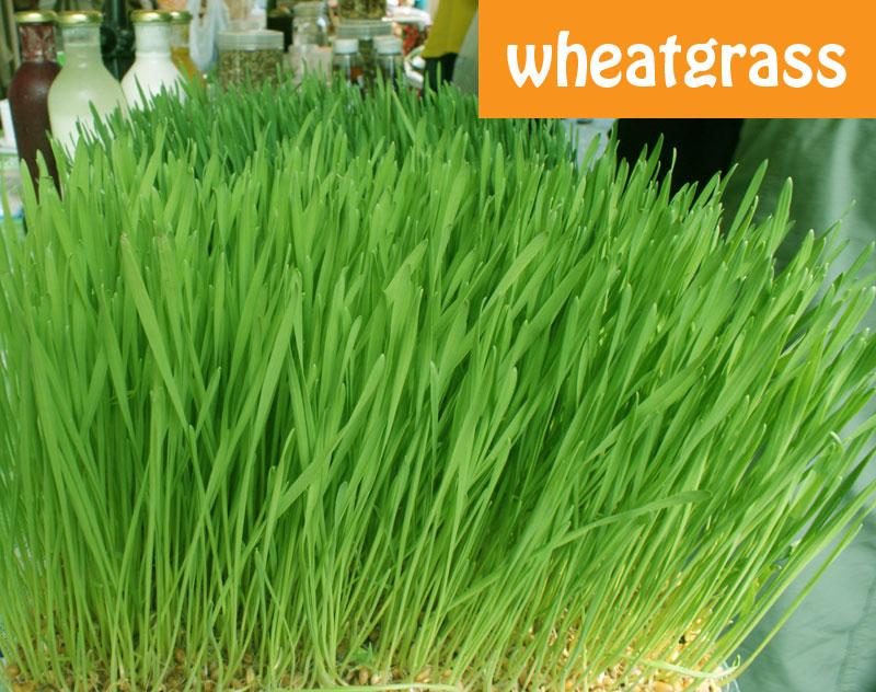Wheagrasschlorophyll