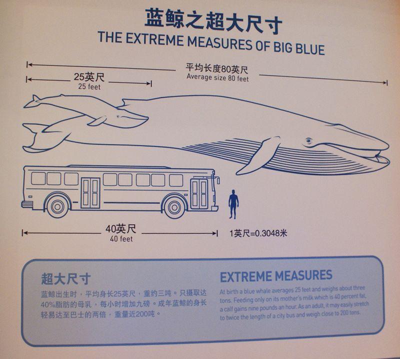Bluewavescale