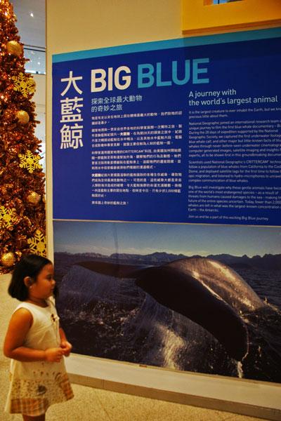 Bluewhaleshow
